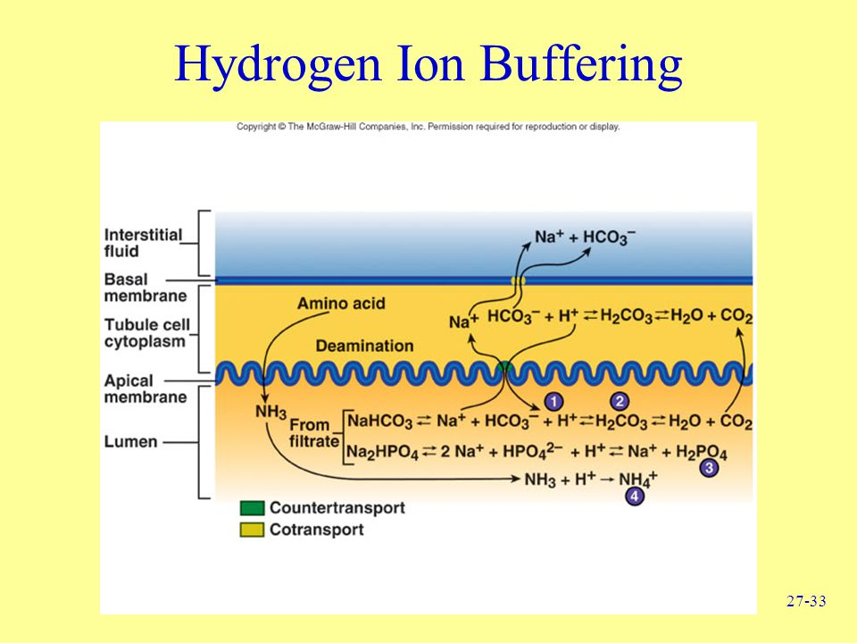 Hydrogen Ion Buffering
