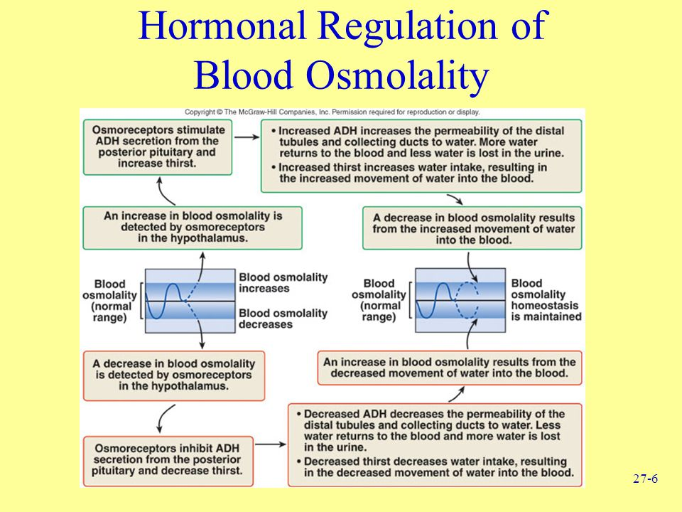 Hormonal Regulation of Blood Osmolality