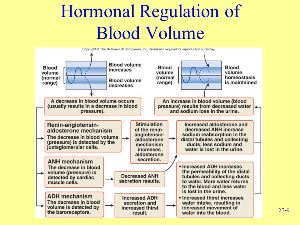 Hormonal Regulation of Blood Volume