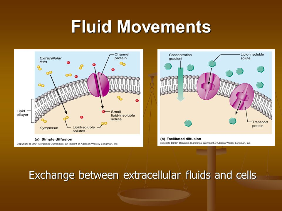 Fluid Movements Exchange between extracellular fluids and cells