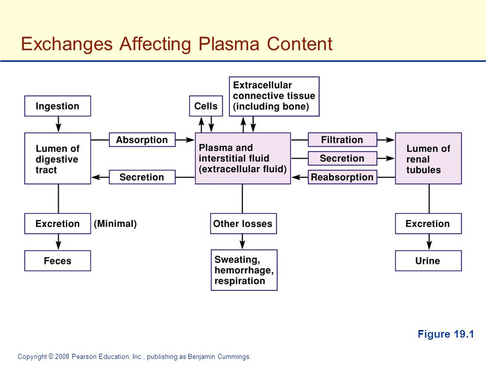 The Urinary System Fluid And Electrolyte Balance Ppt Video Online