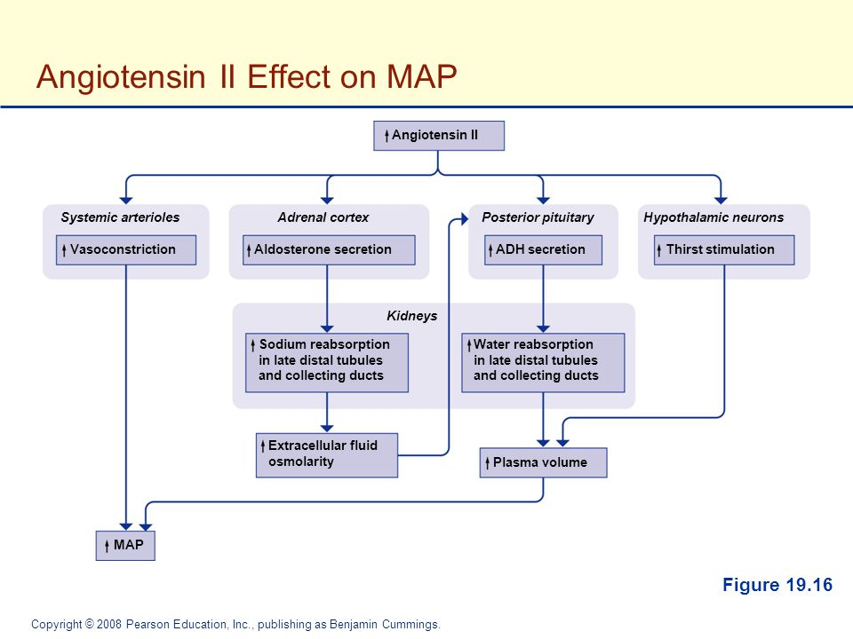 Angiotensin II Effect on MAP