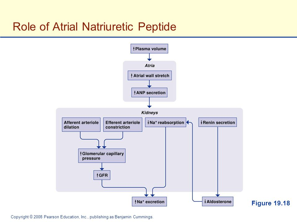 Role of Atrial Natriuretic Peptide