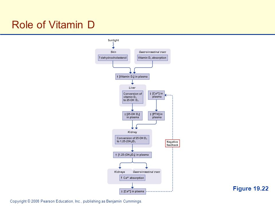 Role of Vitamin D Figure 19.22