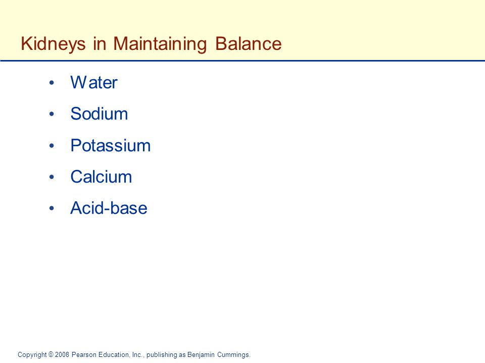 Kidneys in Maintaining Balance