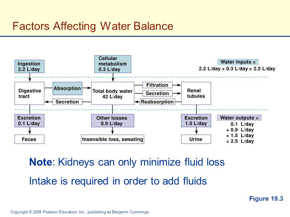 Factors Affecting Water Balance