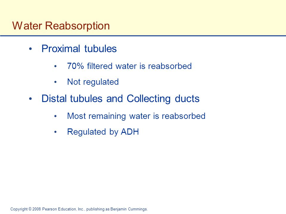 Water Reabsorption Proximal tubules