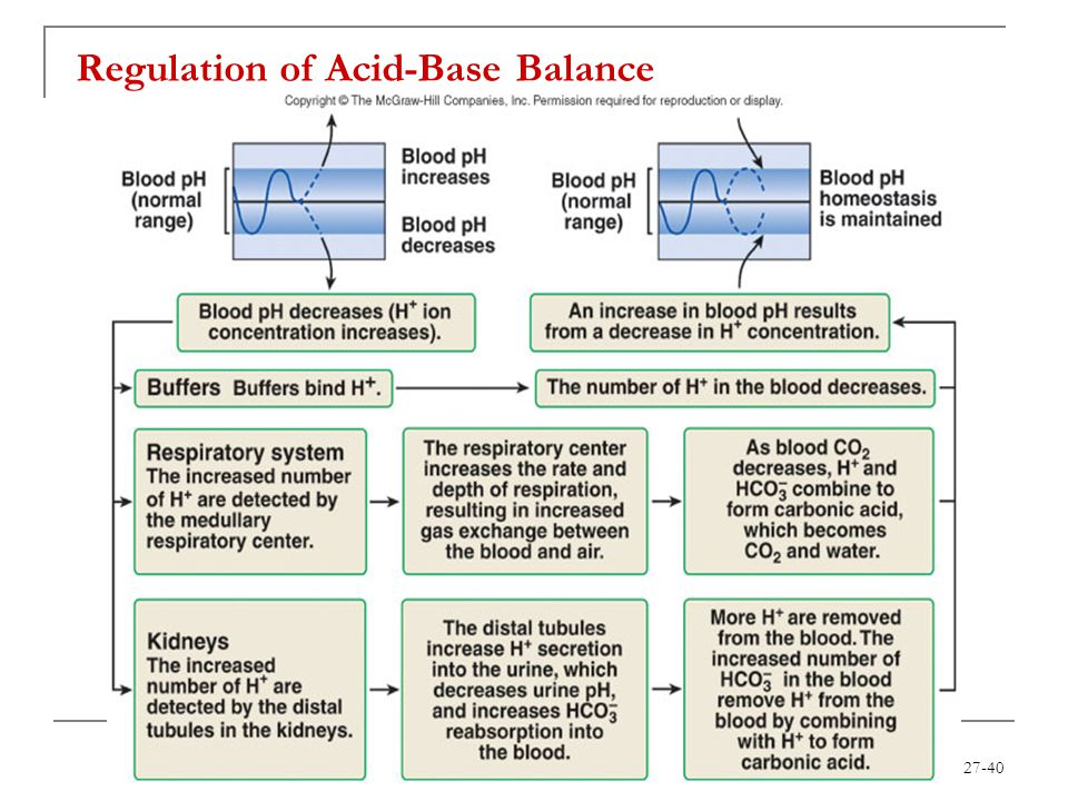 Chapter 27 Fluid Electrolyte And Acid Base Homeostasis Ppt Download
