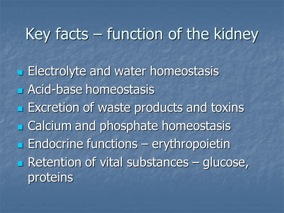 Key facts – function of the kidney