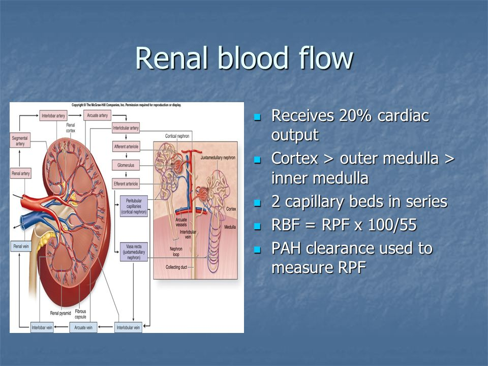 Renal blood flow Receives 20% cardiac output