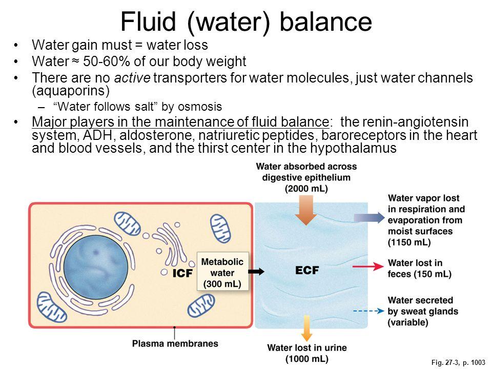 fluid electrolyte and acid base balance water homeostasis answers