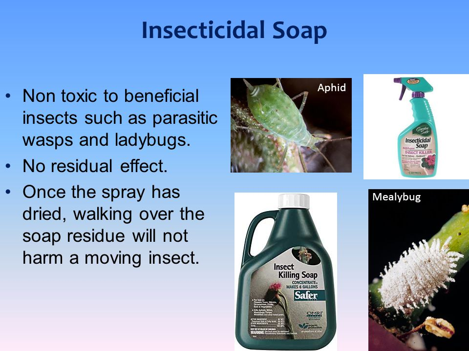 Insecticidal Soap Aphid. Non toxic to beneficial insects such as parasitic wasps and ladybugs. No residual effect.