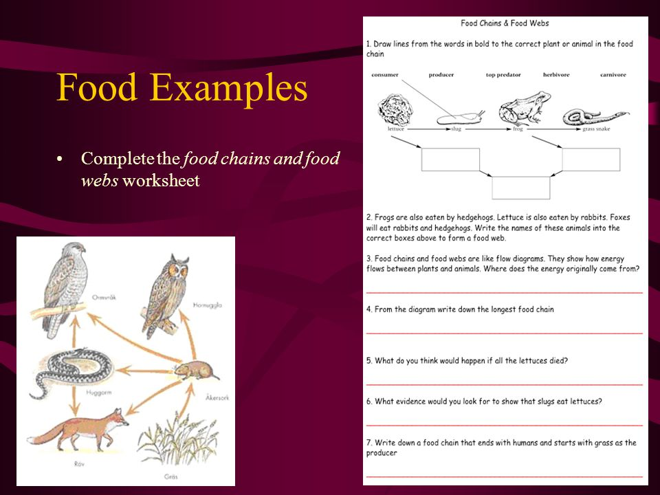 Food Chains Webs D Crowley Ppt Video Online Download. 14 Food Exles Plete The Chains And Webs Worksheet. Worksheet. Food Web Worksheet At Mspartners.co