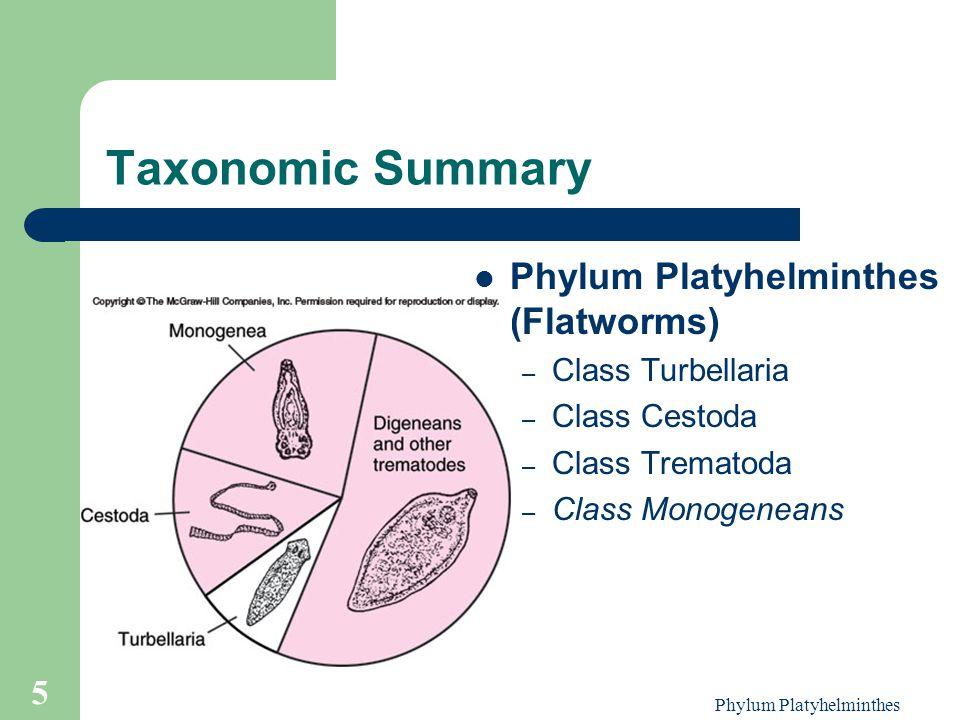 phylum platyhelminthes trematode osztály