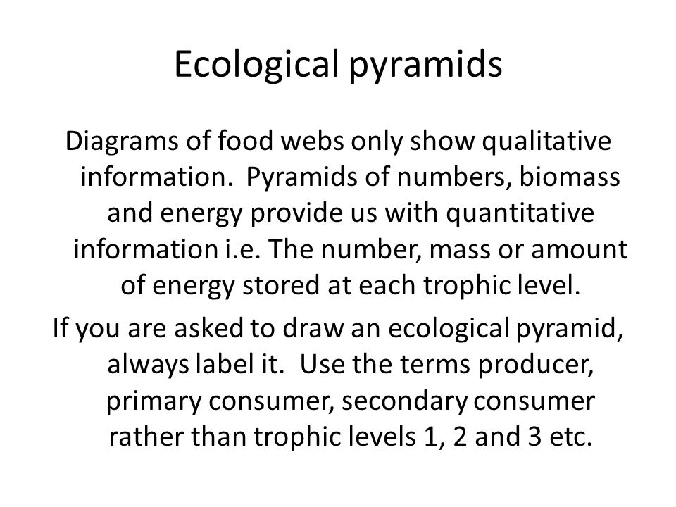 significance of ecological pyramids