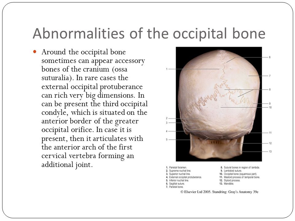 Functional anatomy of skull - ppt download