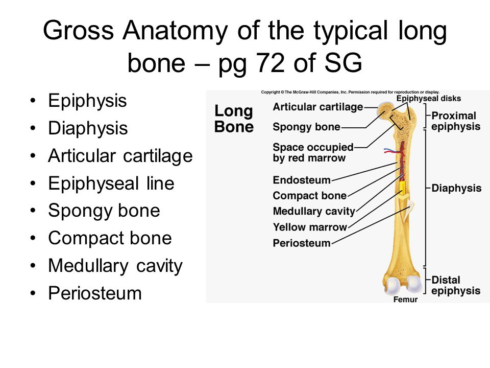 THE SKELETAL SYSTEM CHAPTERS 6 & 7 - ppt download