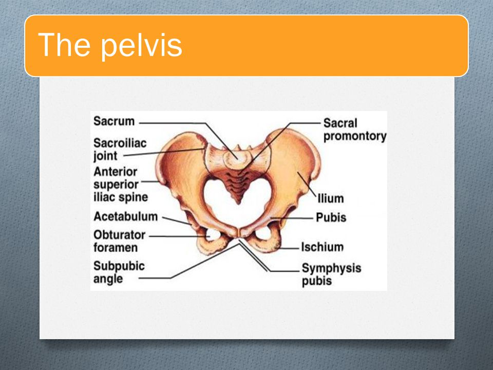 Anatomy of normal pelvis & Fetal skull - ppt video online download