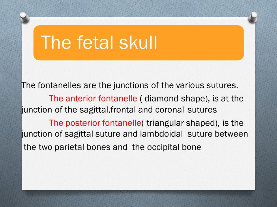 Anatomy Of Normal Pelvis Fetal Skull Ppt Video Online Download