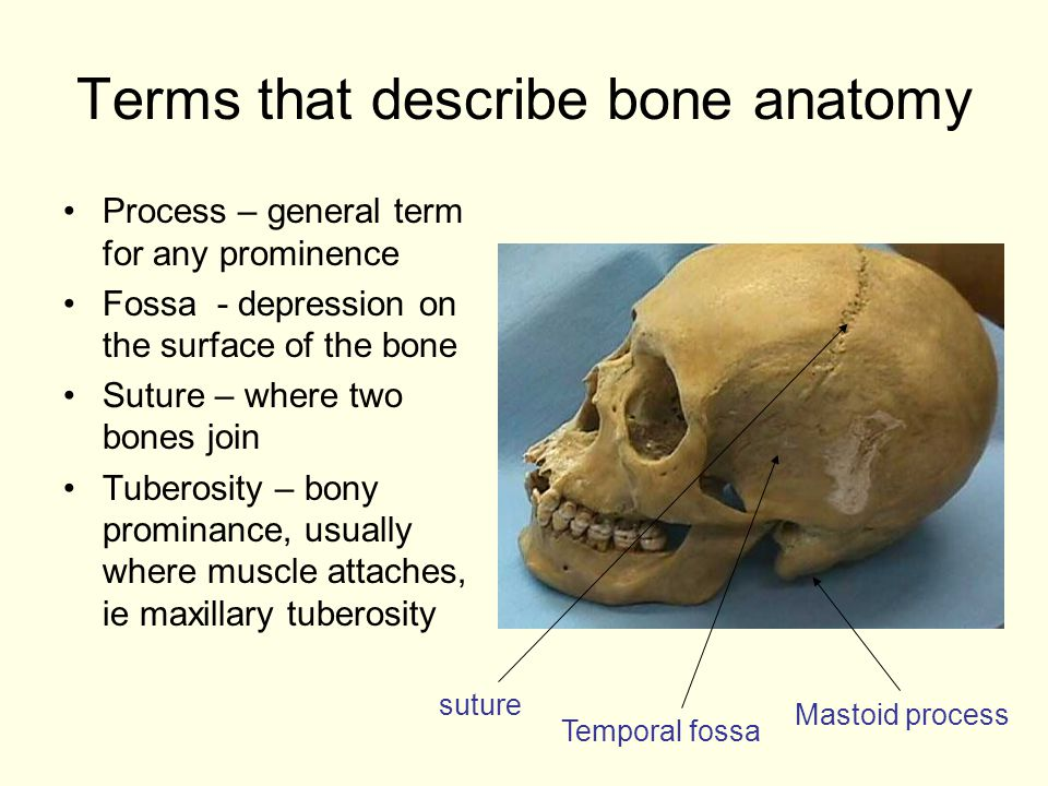 And Their Radiographic Appearance - ppt video online download