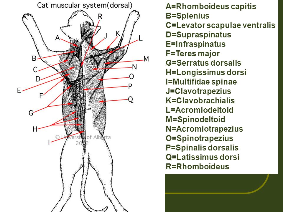 Anatomy And Physiology Ppt Video Online Download