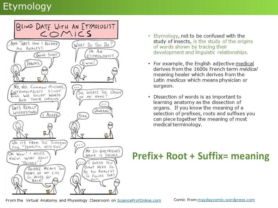 Decoding Medical Terminology - ppt download