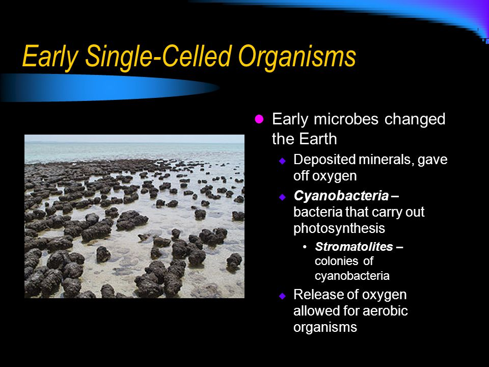 Image result for photosynthesis of early earth organisms