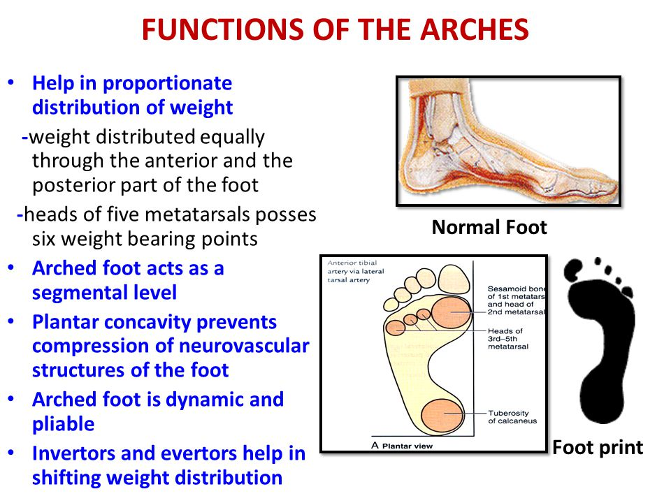 FOOT AND ARCHES OF THE FOOT - ppt video online download