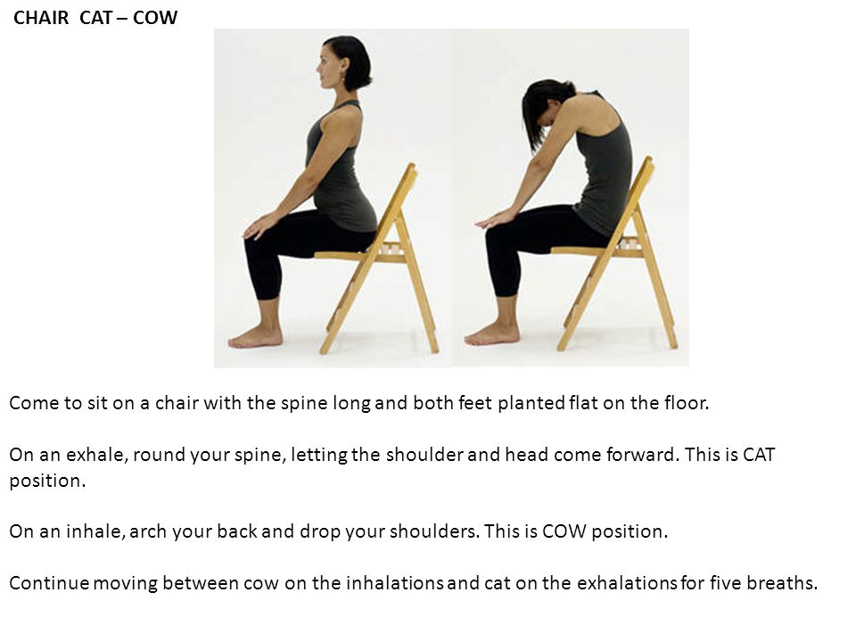 CHAIR CAT – COW Come to sit on a chair with the spine long and both feet planted flat on the floor.