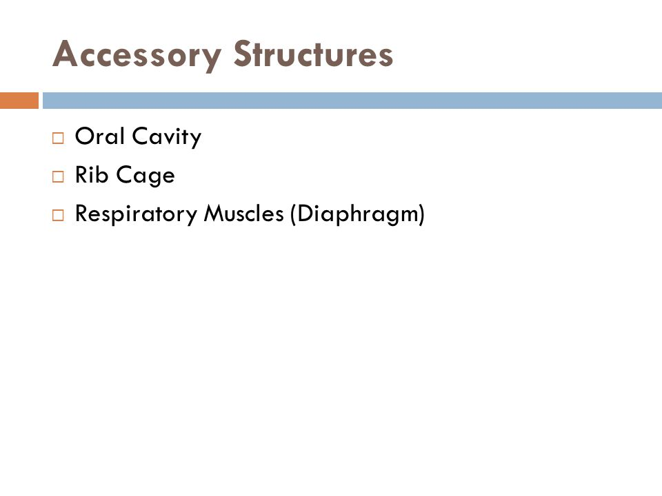 Accessory Structures Oral Cavity Rib Cage
