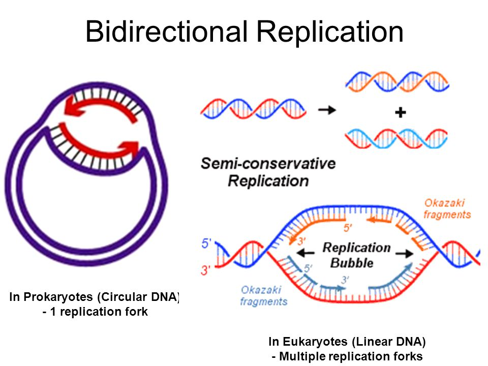 The Molecular Basis Of Inheritance Ppt Video Online Download