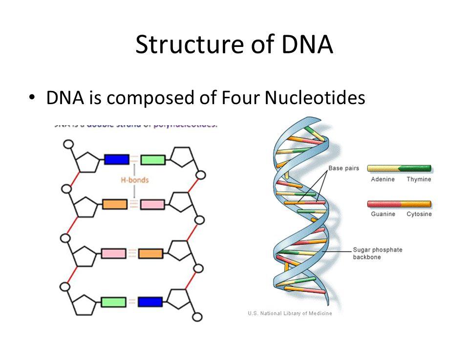 dna nucleotide ba self reliance - 960×720