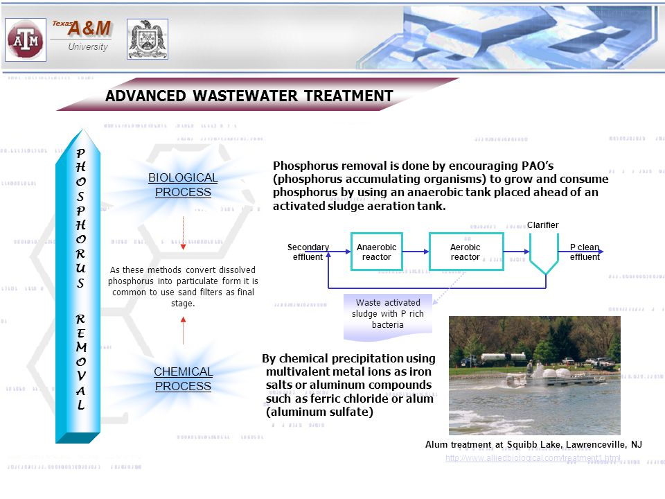 Waste activated sludge with P rich bacteria