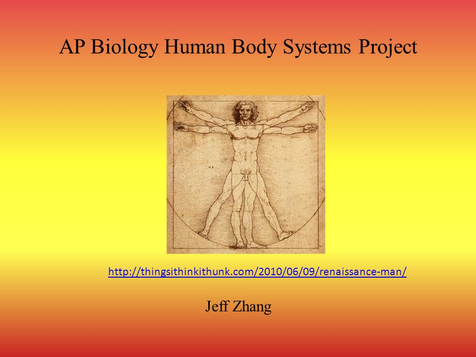Ap Biology Human Body Systems Project Ppt Download