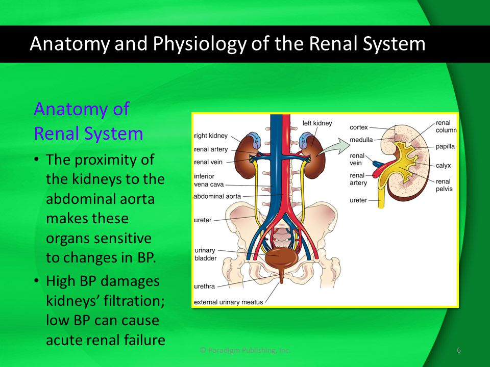 The Renal System and Drug Therapy - ppt download