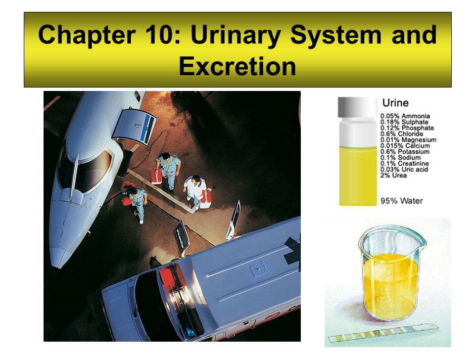 Chapter 10: Urinary System and Excretion