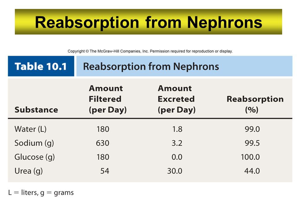 Reabsorption from Nephrons