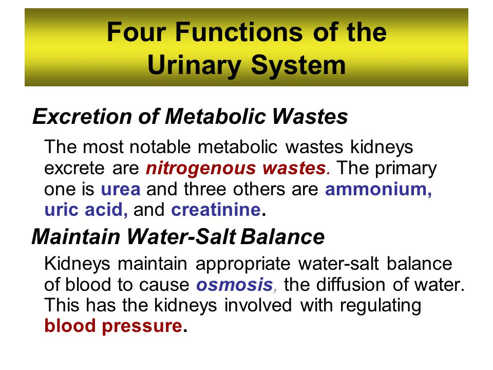 Four Functions of the Urinary System