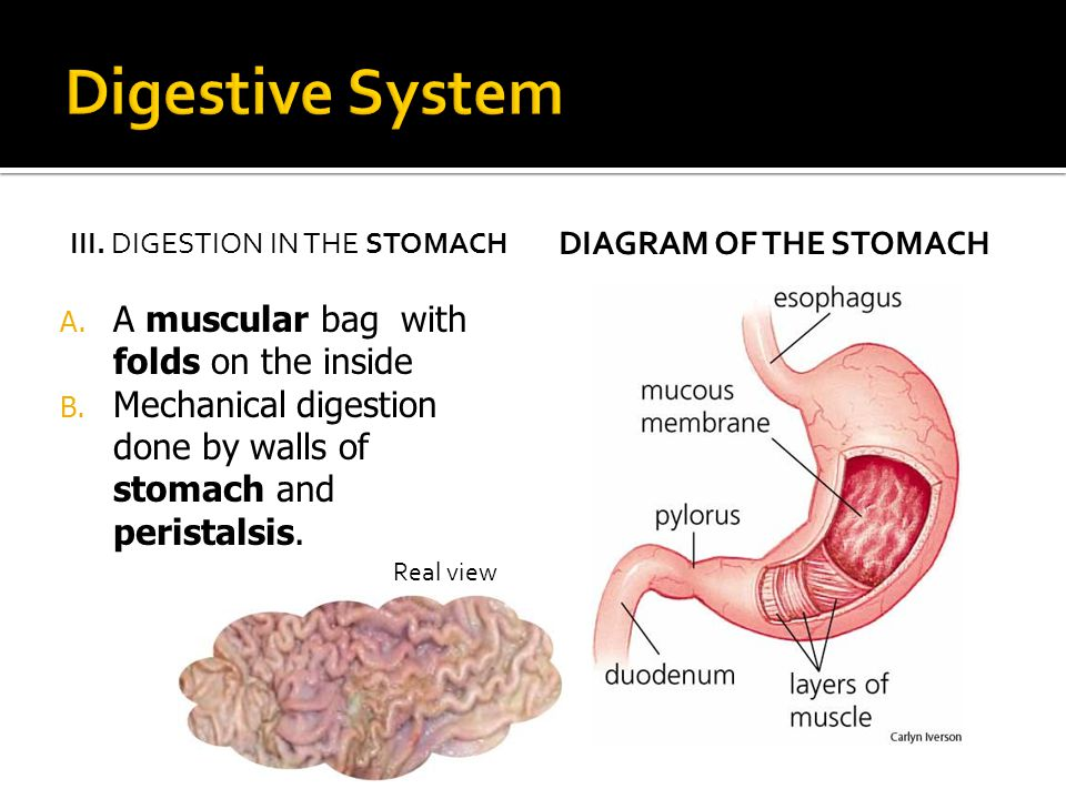Digestive system ppt video online download 6 digestive ccuart Gallery