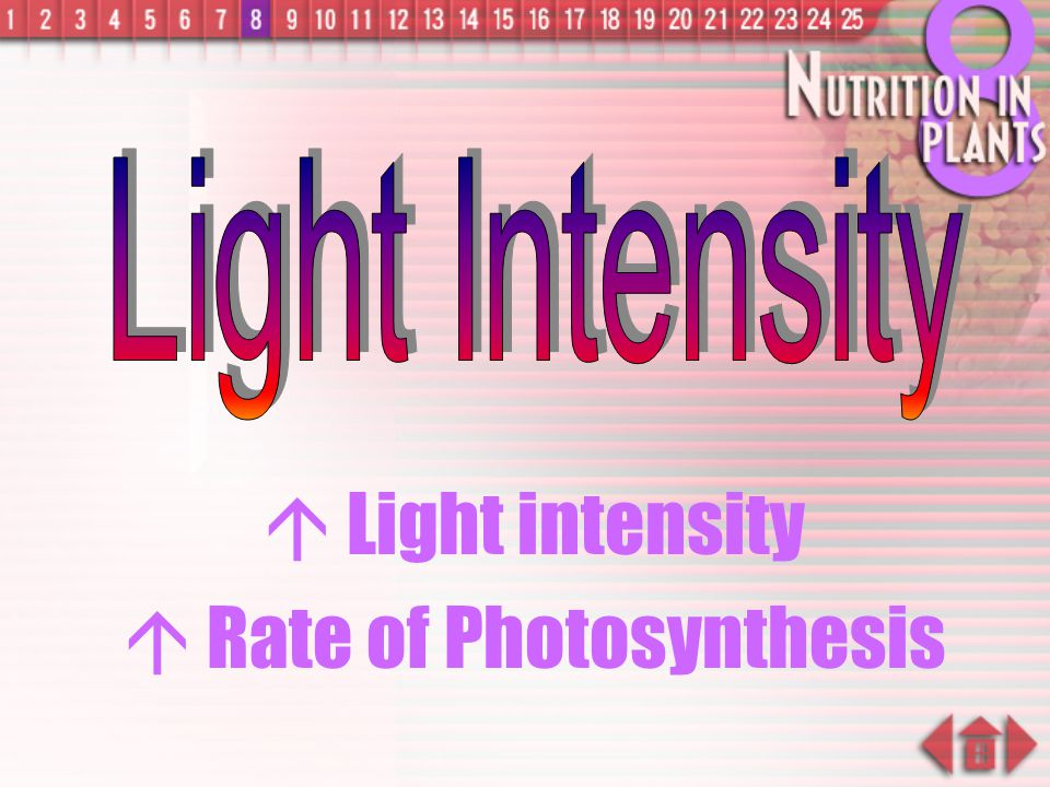  Rate of Photosynthesis