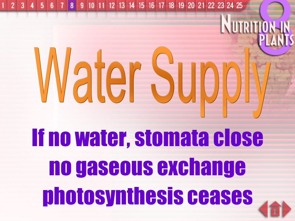 If no water, stomata close no gaseous exchange photosynthesis ceases