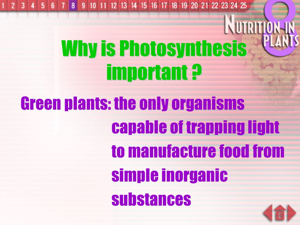 Why is Photosynthesis important