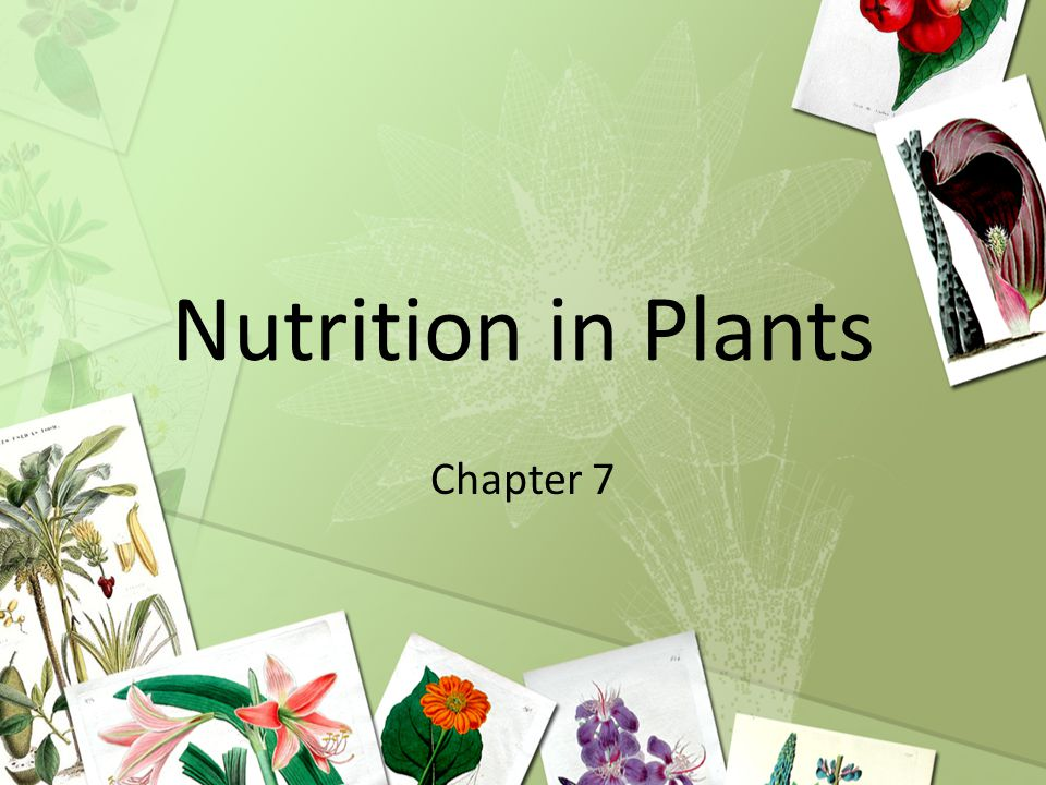 Nutrition In Plants Chapter Ppt Download