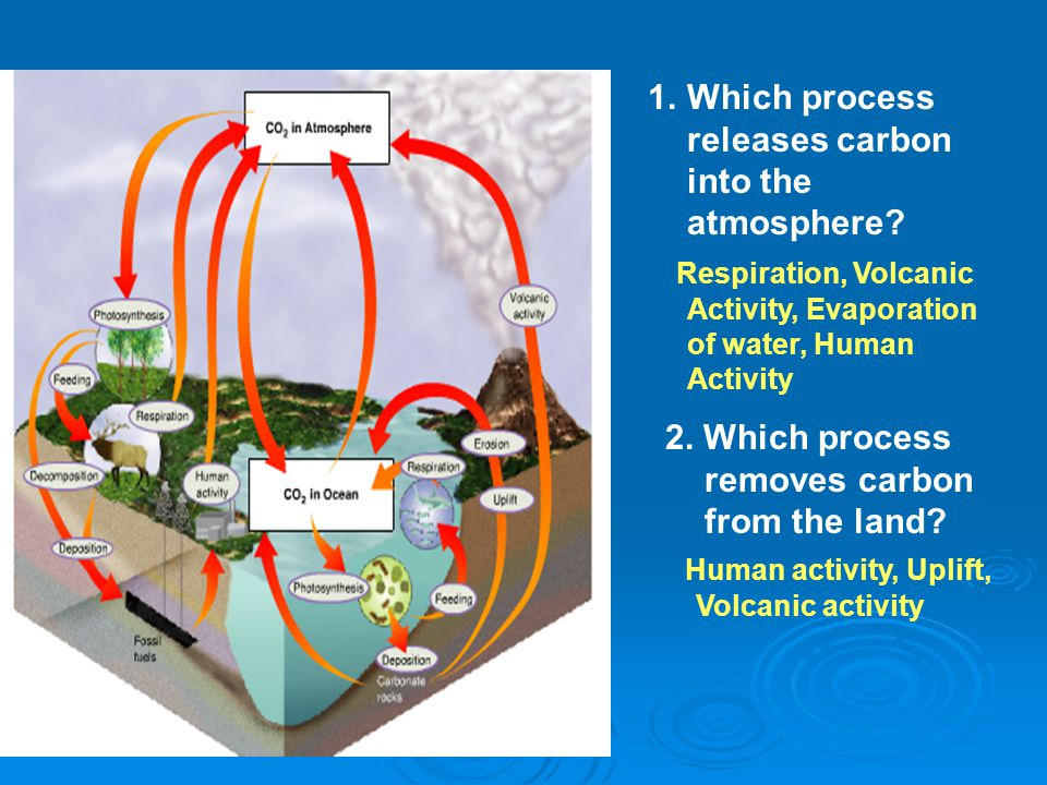 Which process releases carbon into the atmosphere