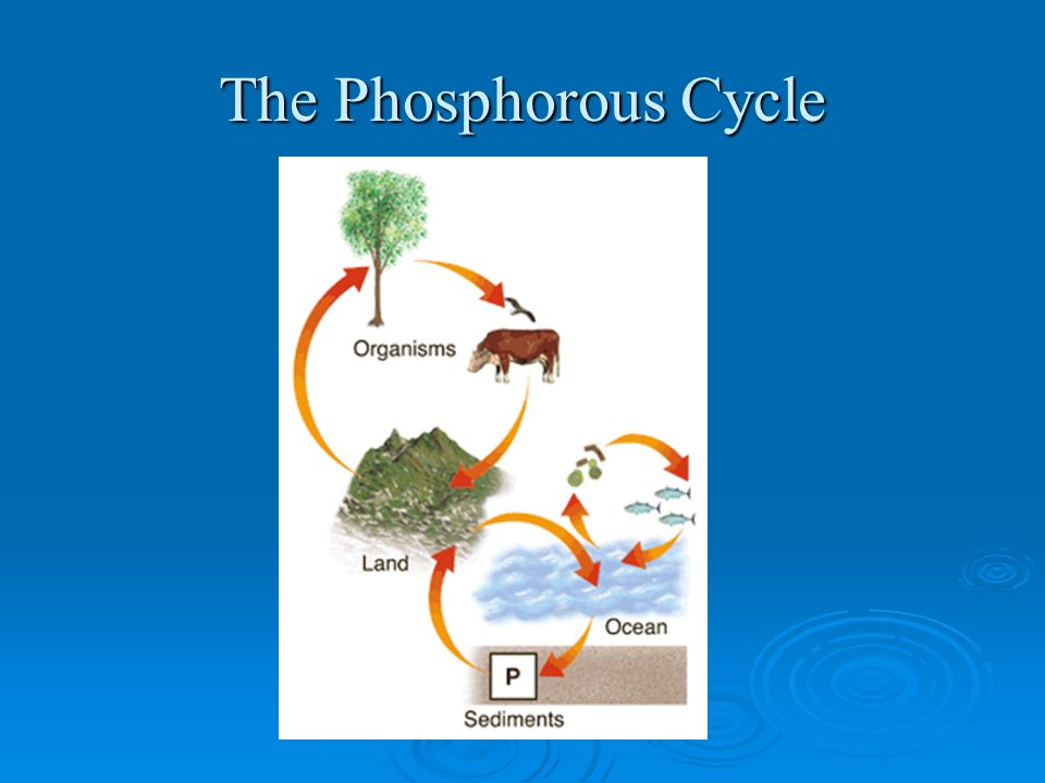 The Phosphorous Cycle