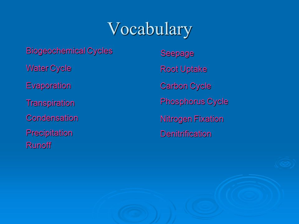 Vocabulary Biogeochemical Cycles Seepage Water Cycle Evaporation