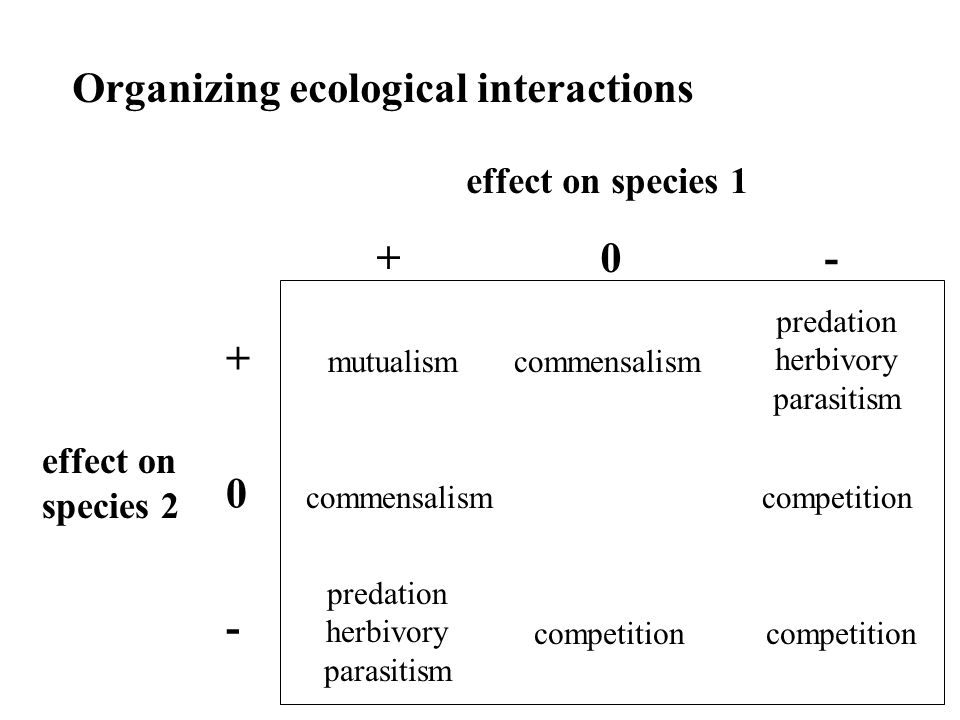 Organizing ecological interactions