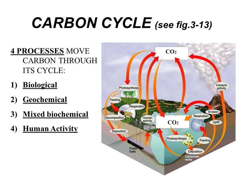CARBON CYCLE (see fig.3-13)