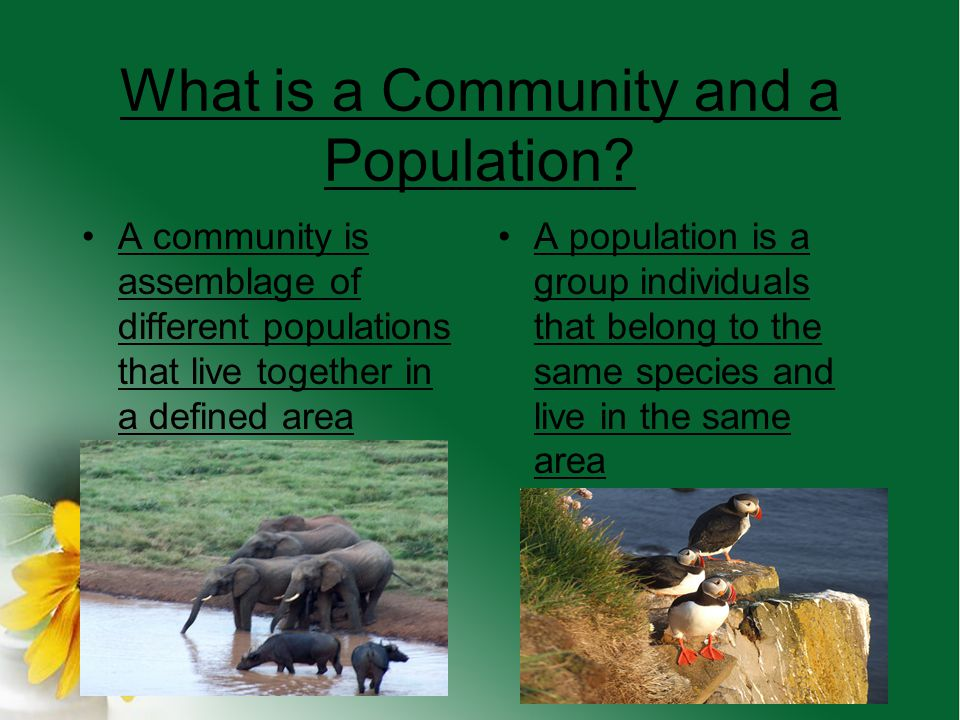 What is a Community and a Population