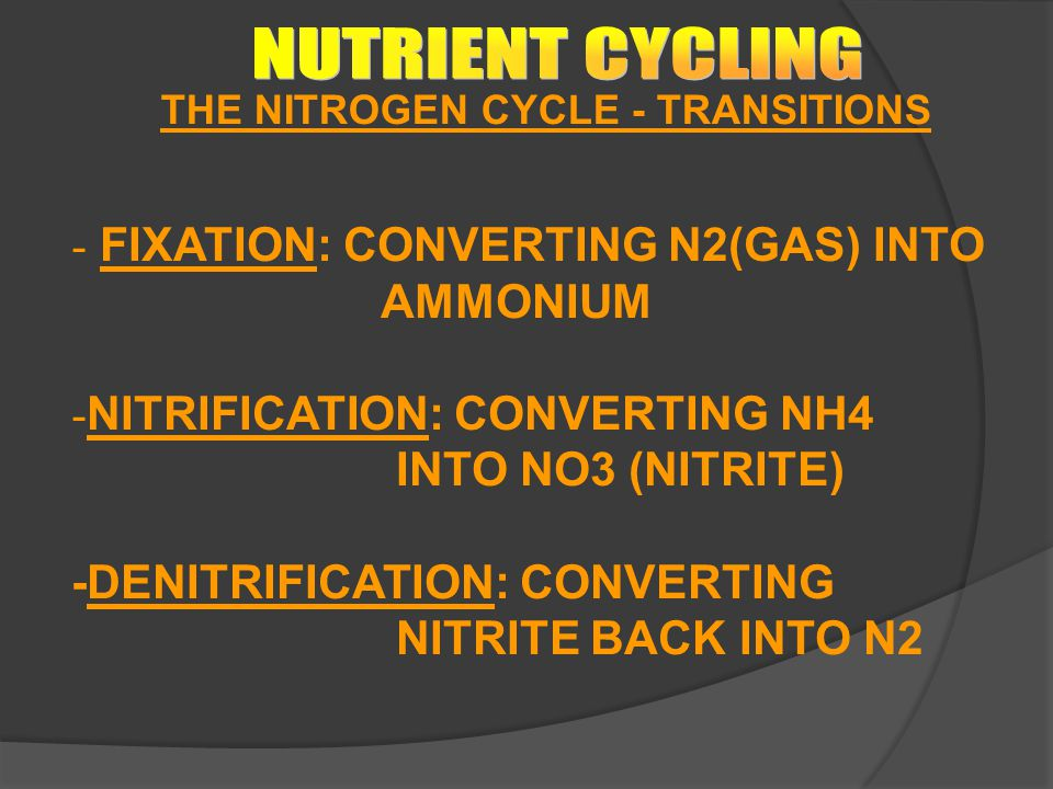NUTRIENT CYCLING FIXATION: CONVERTING N2(GAS) INTO AMMONIUM